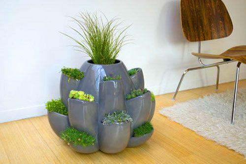 Vaso de plantas para casa