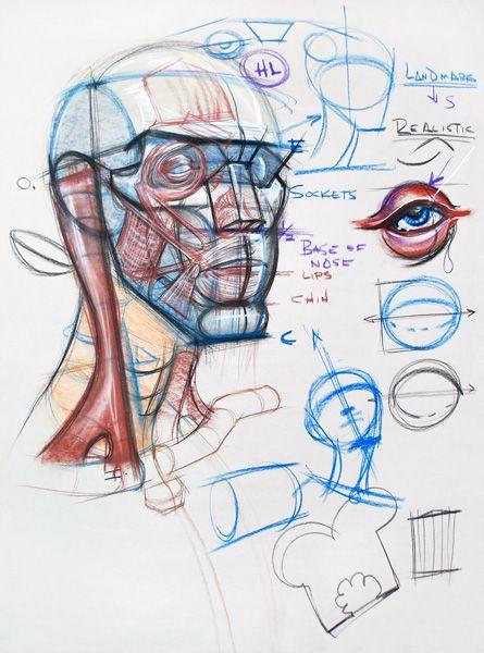 anatomy head michael hampton anatomia cabeça pinterest