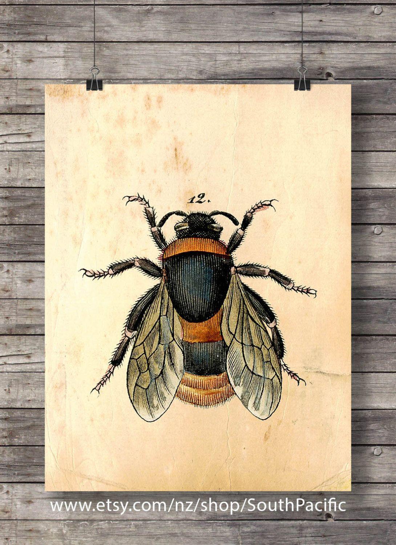 Vintage Bee print bee honey illustration Printable art vintage style ...