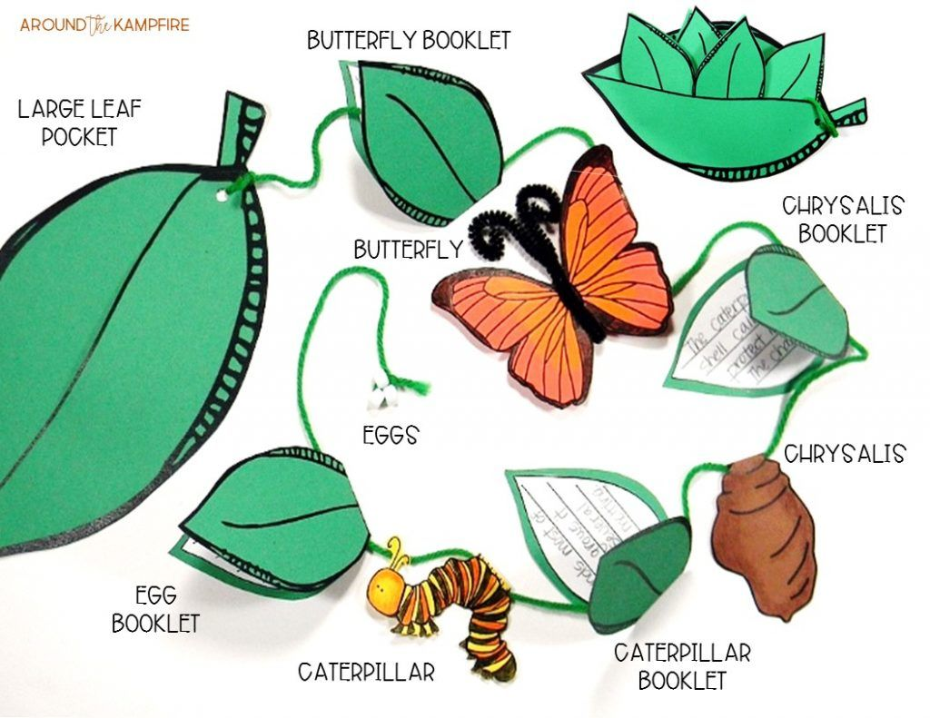 Butterfly Life Cycle Resources Amp Free Printables