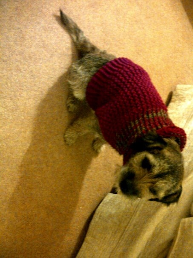 dog jacket loom knitted Doggie stuff to make For Peaches & Abbey Pint...
