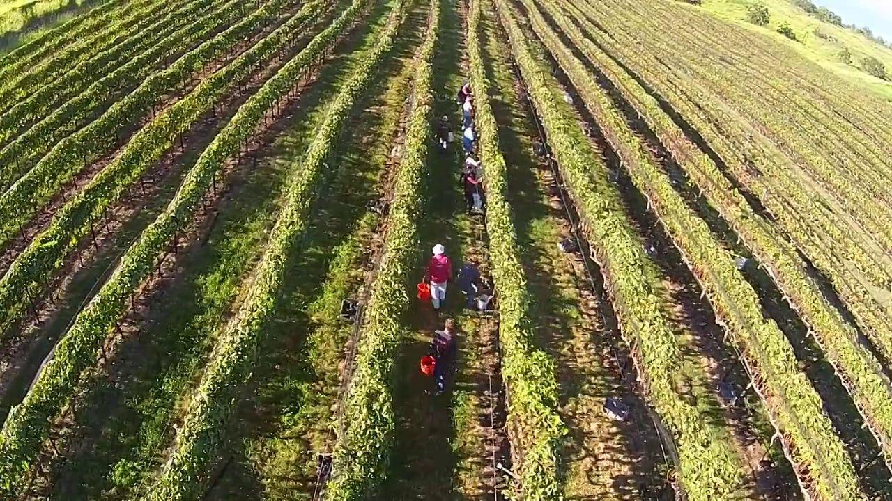 MauiWine Vineyard Aerial Footage Aerial footage, Oregon