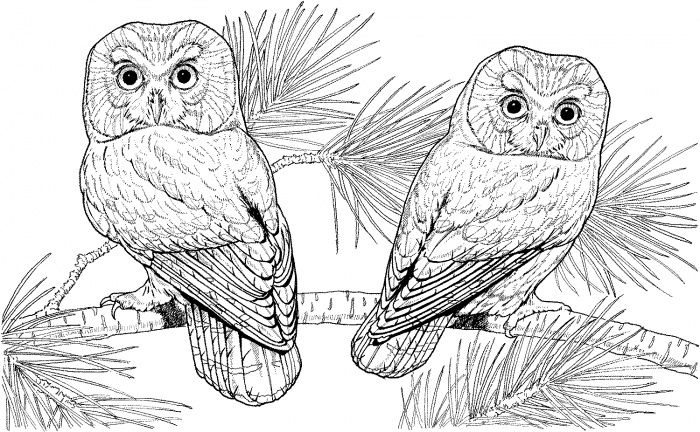 owl colouring pages picture 2 animal print owl coloring pages for adults free - Free Owl Coloring Pages 2