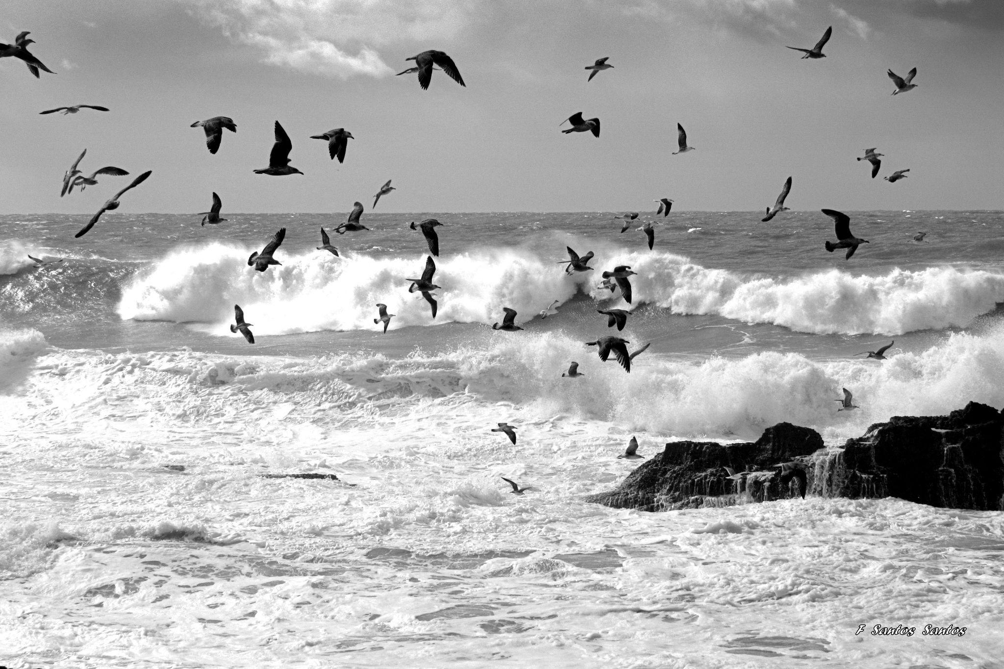 Voando baixinho . . . - ... Uma gaivota voava, voava, assas de vento, coração de mar. Como ela, somos livres, somos livres de voar . . .   Letra e música: Ermelinda Duarte