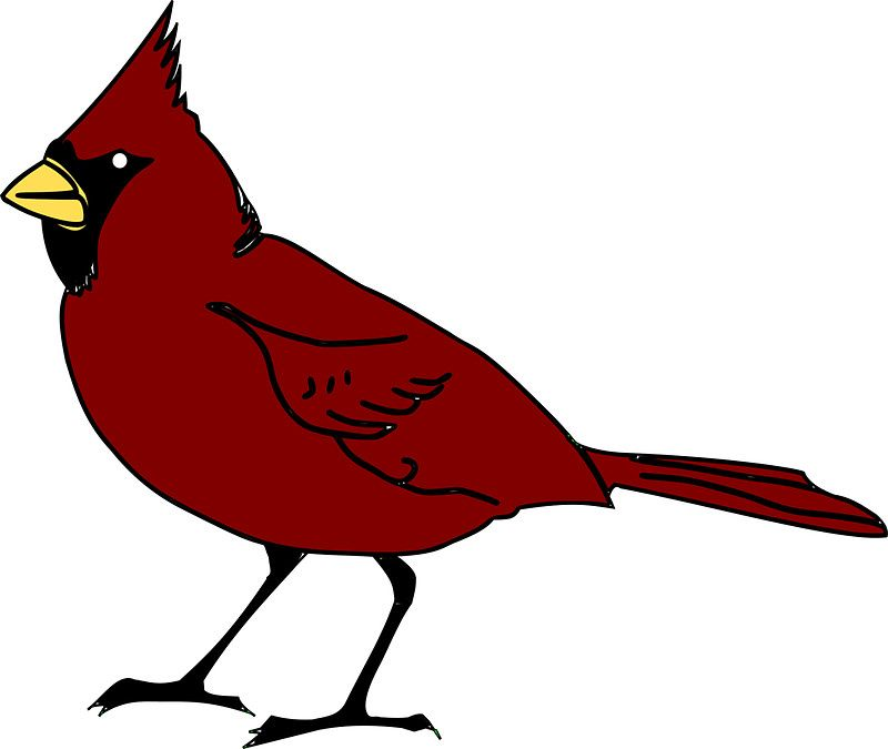 Cardinal Bird The State Bird Of Illinois Bird Art Art Bird