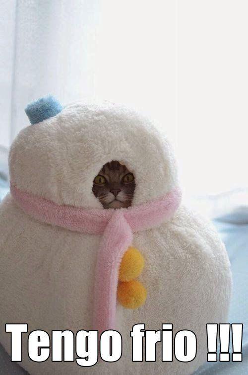 Tengo Frio Yo Con Frio Matutino Memes De Frio Tengo Frio Meme Gato