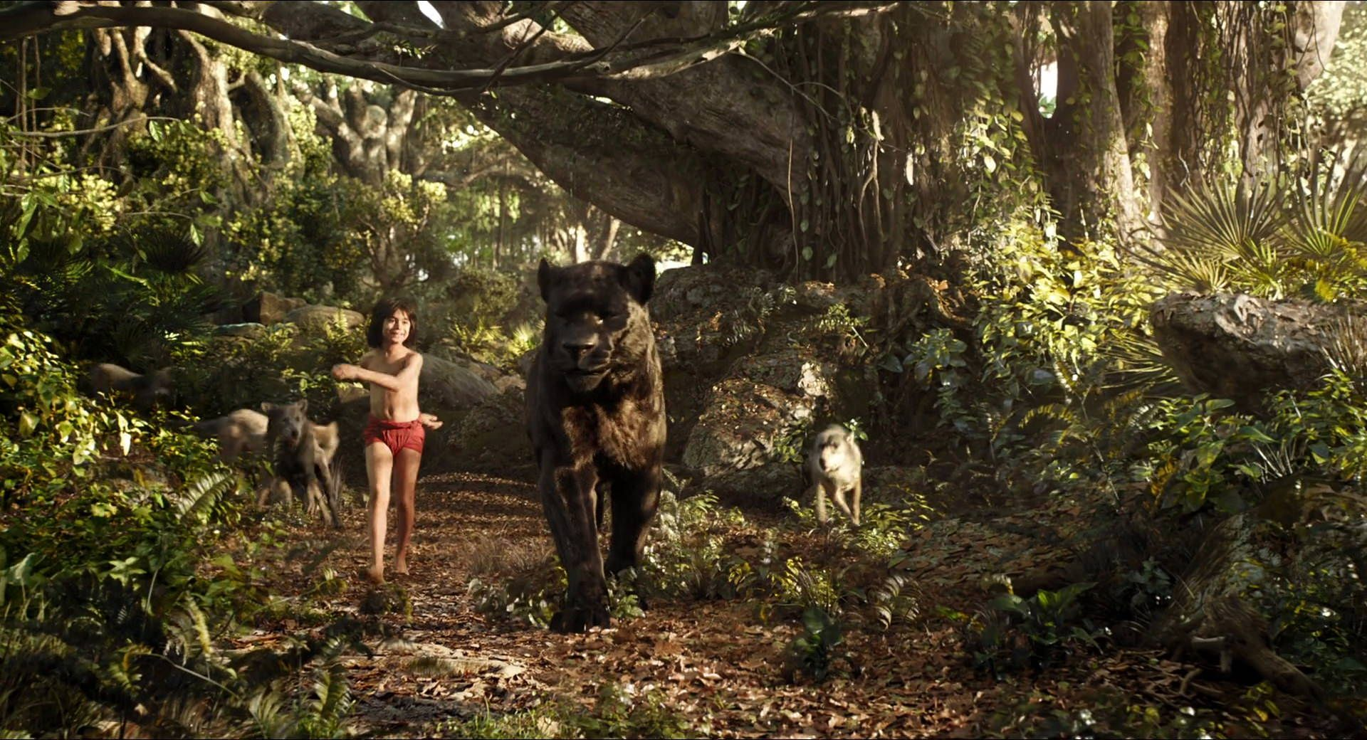 Screencap gallery for the jungle book 2016 1080p bluray disney live