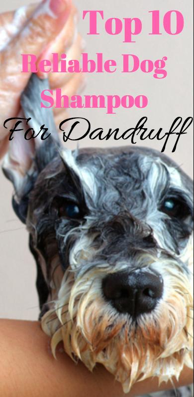 Best 10 Dog Shampoo To Get Rid Of Dandruff Dogshampoo Dandruffindog Getridofdandruff Dog Dandruff Dog Shampoo Dog Nutrition