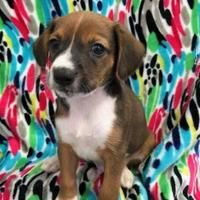 Available pets at Wright-Way Rescue in Morton Grove, Illinois #mortongrove