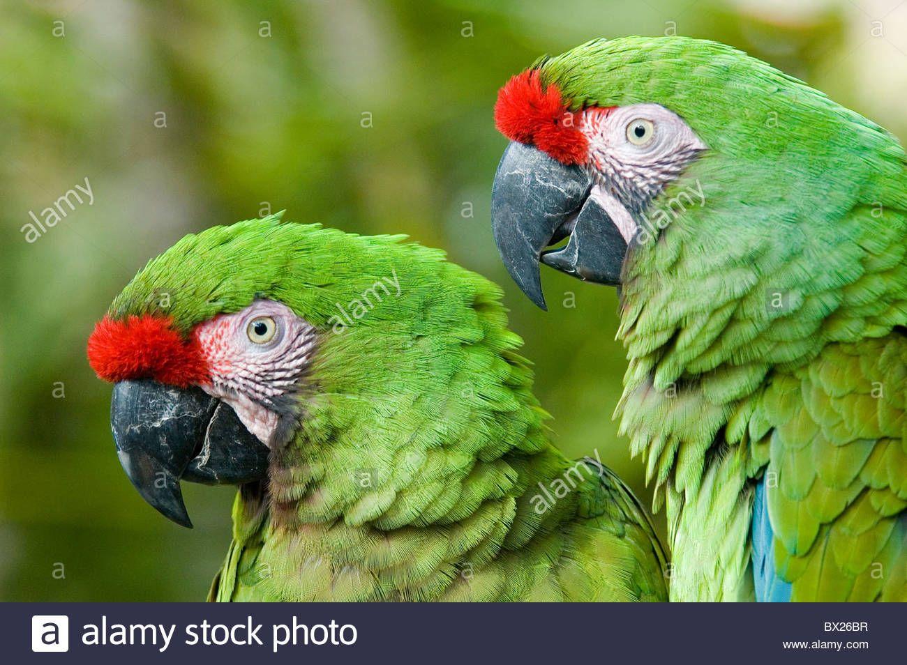 bird - Pesquisa Google