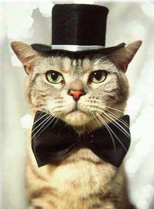 "top hat AND a bow tie...does the cat have ""jazz paws"" too."