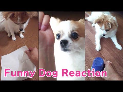 Photo of Funny Dog Reaction to Magic Tricks