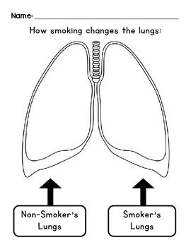 Lungs diagram color complete wiring diagrams how smoking changes the lungs pinterest lungs diagram and students rh pinterest ca lung cancer diagram lung diagram worksheet ccuart Image collections