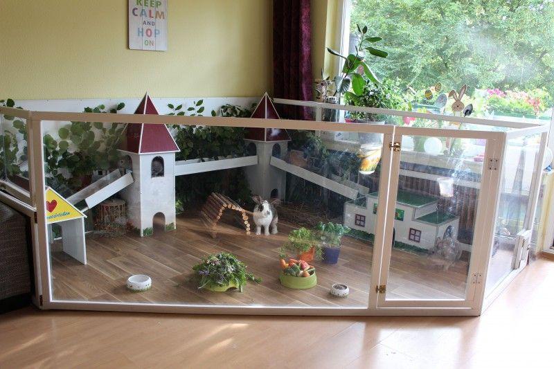 kaninchengehege plexiglas tiere pinterest kaninchengehege kaninchen und kaninchenstall. Black Bedroom Furniture Sets. Home Design Ideas