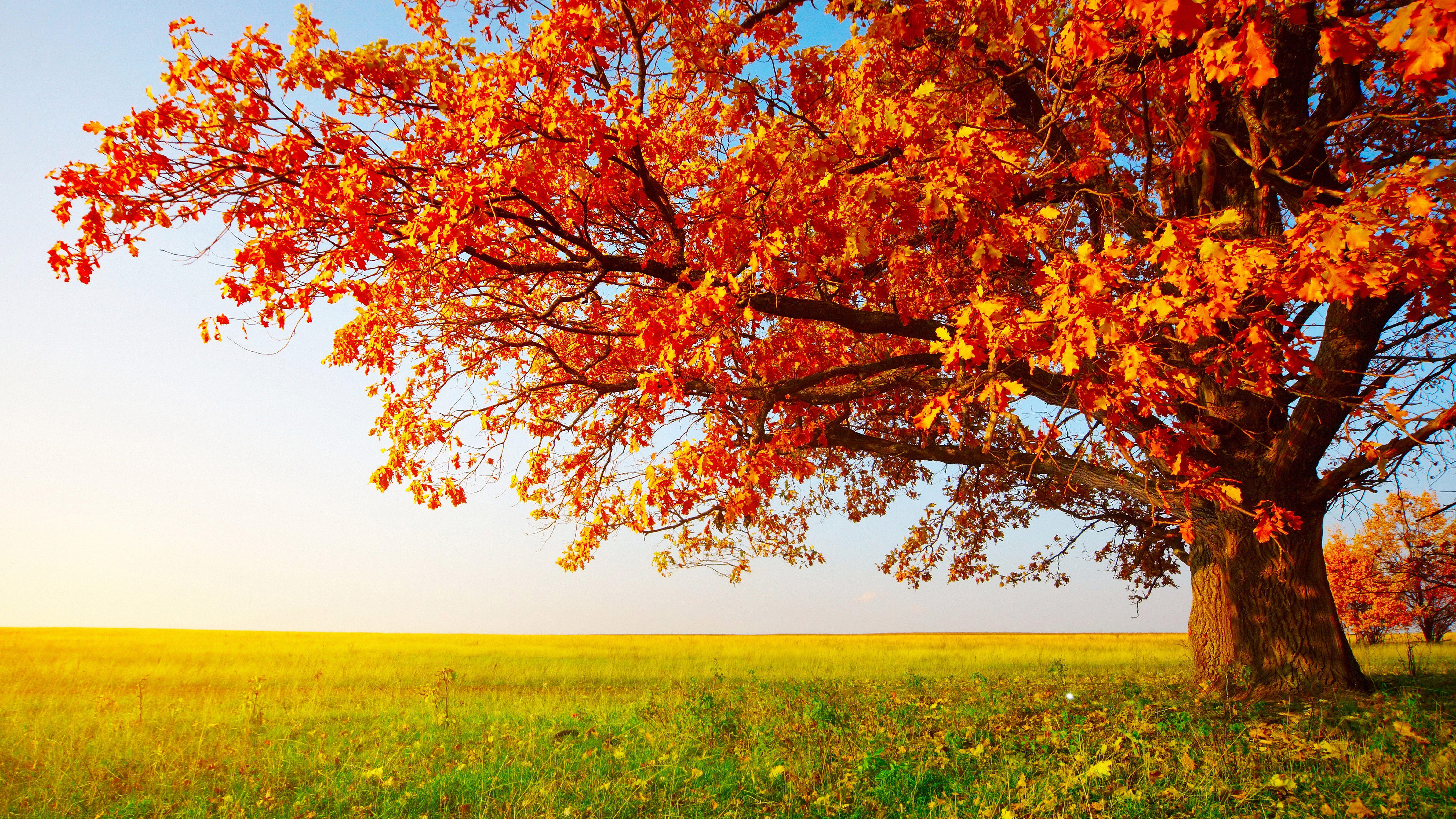 8k wallpaper fall landscape Árboles en otoño, Fondos de