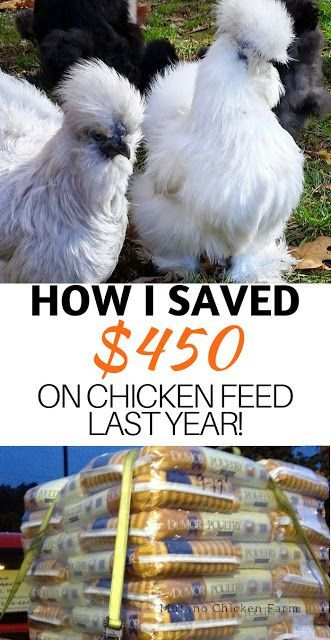 How I saved $450 on chicken feed last year (you can too ...