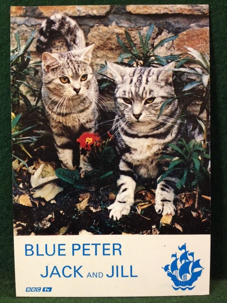 083a7d08f Blue Peter Cats - Jack And Jill - 6x4 Photo Card - More Listed ...