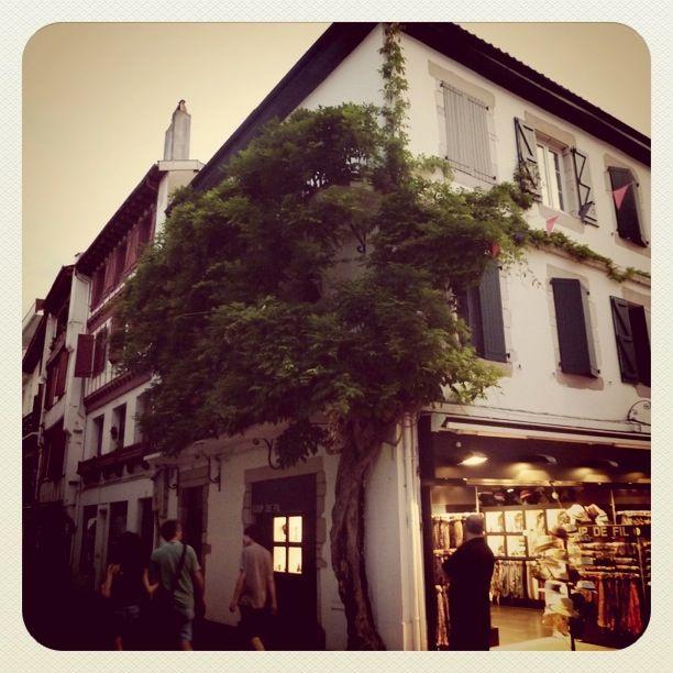 San Juan de Luz. Life in a tree.