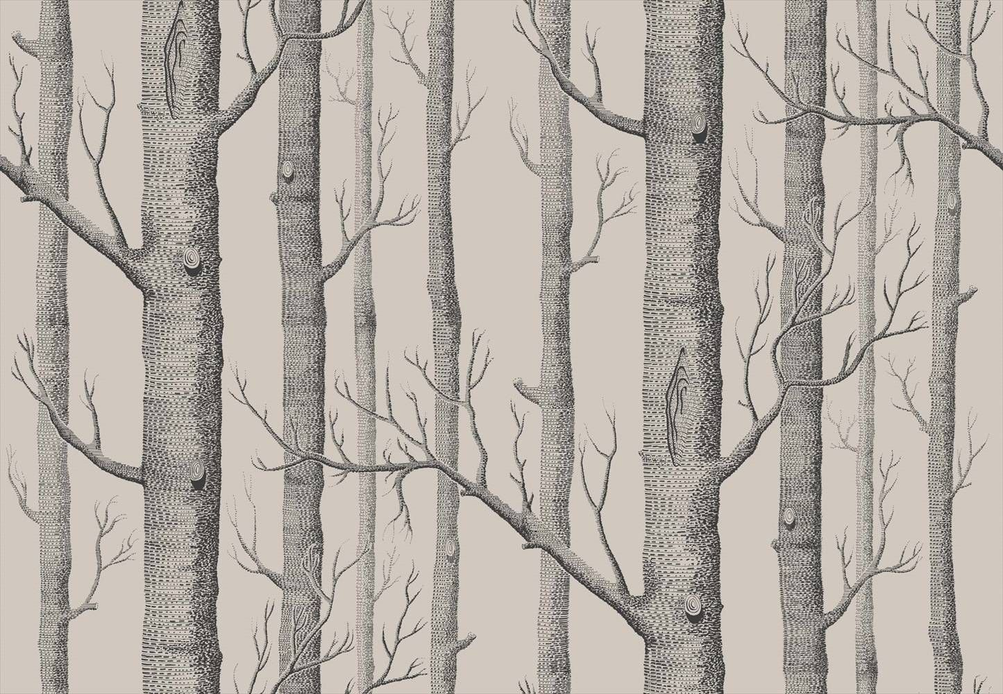 Cole And Son Woods Linen And Charcoal Wallpaper 112 3009 Birch
