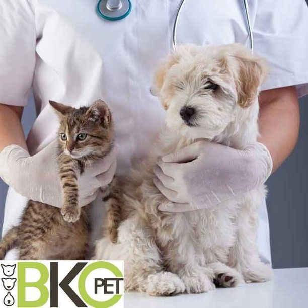 Pin on Pets Care