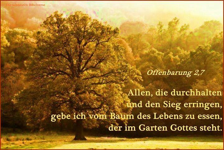 Baum des Lebens Bibel vers