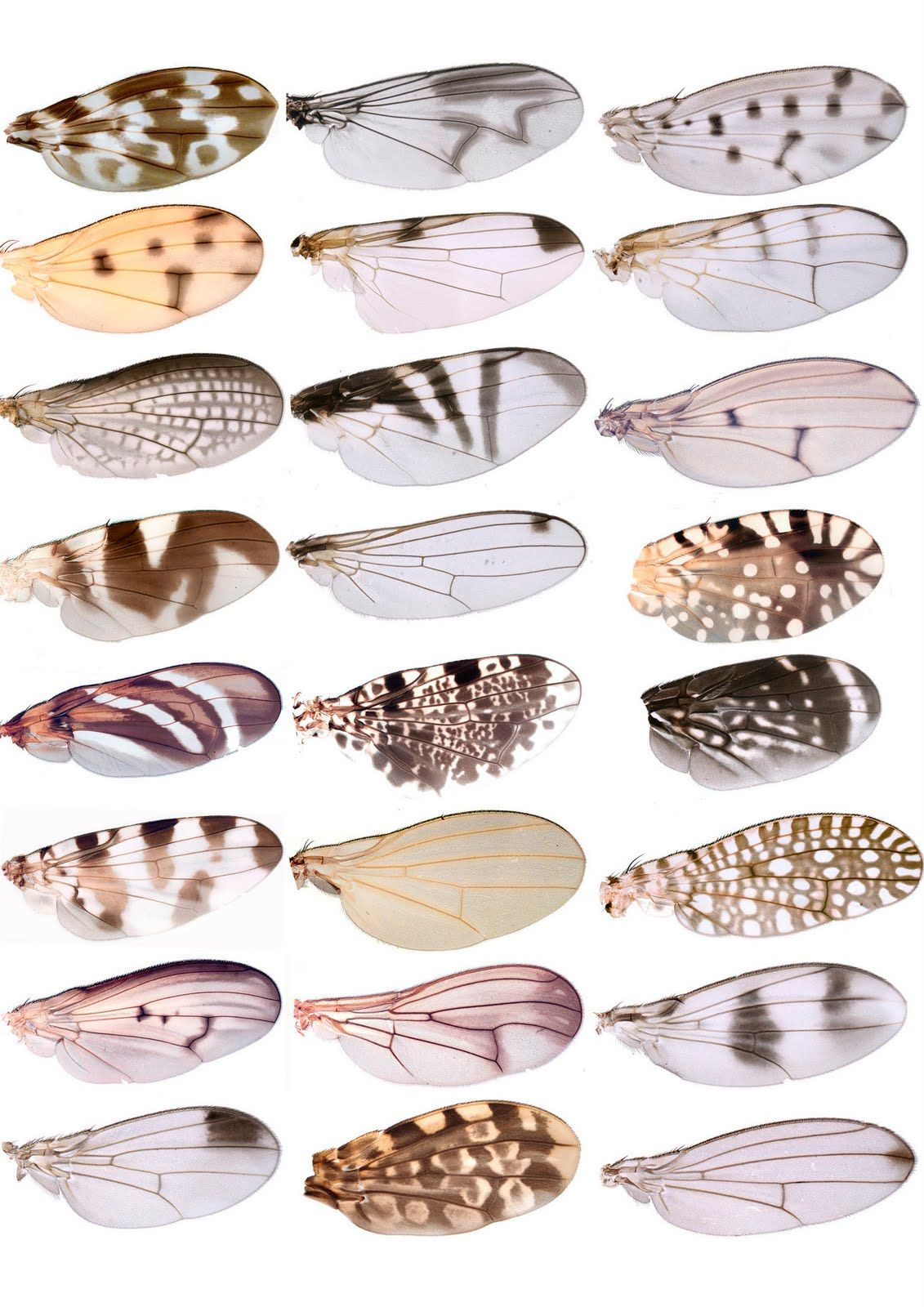 Alpines: INSECT WINGS | All that is fragile in life | Pinterest ...