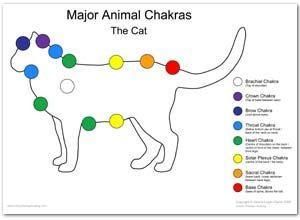 """Résultat de recherche d'images pour """"chakras du chat"""""""