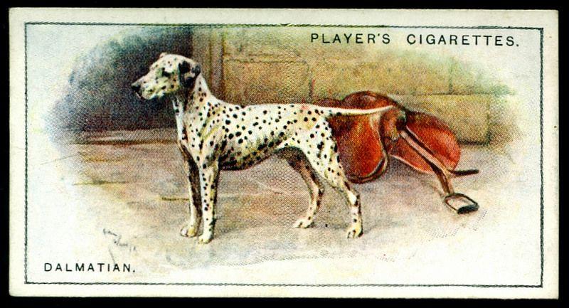 Cigarette Card - Dalmation