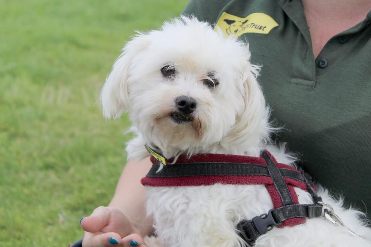 Ellie Marshmallow Dogs Trust Maltese Dogs Dog Breeds Pictures