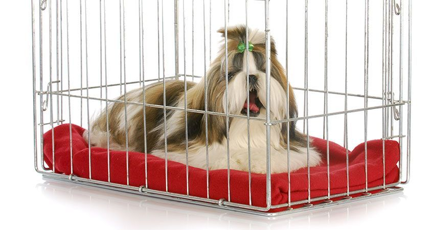 Cesar, How can I stop my dogs from chewing whatever bedding we put in their crate? Loretta Hamann East Northport, NY Loretta,
