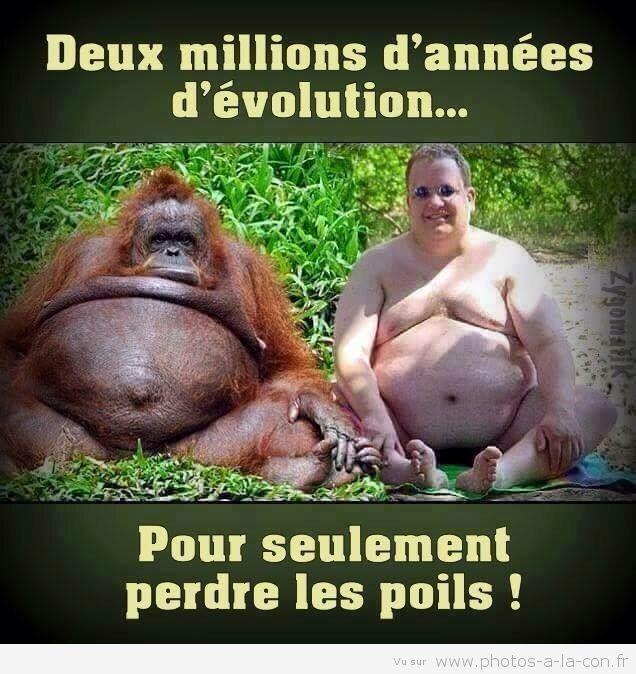 """Résultat de recherche d'images pour """"humour singe"""""""