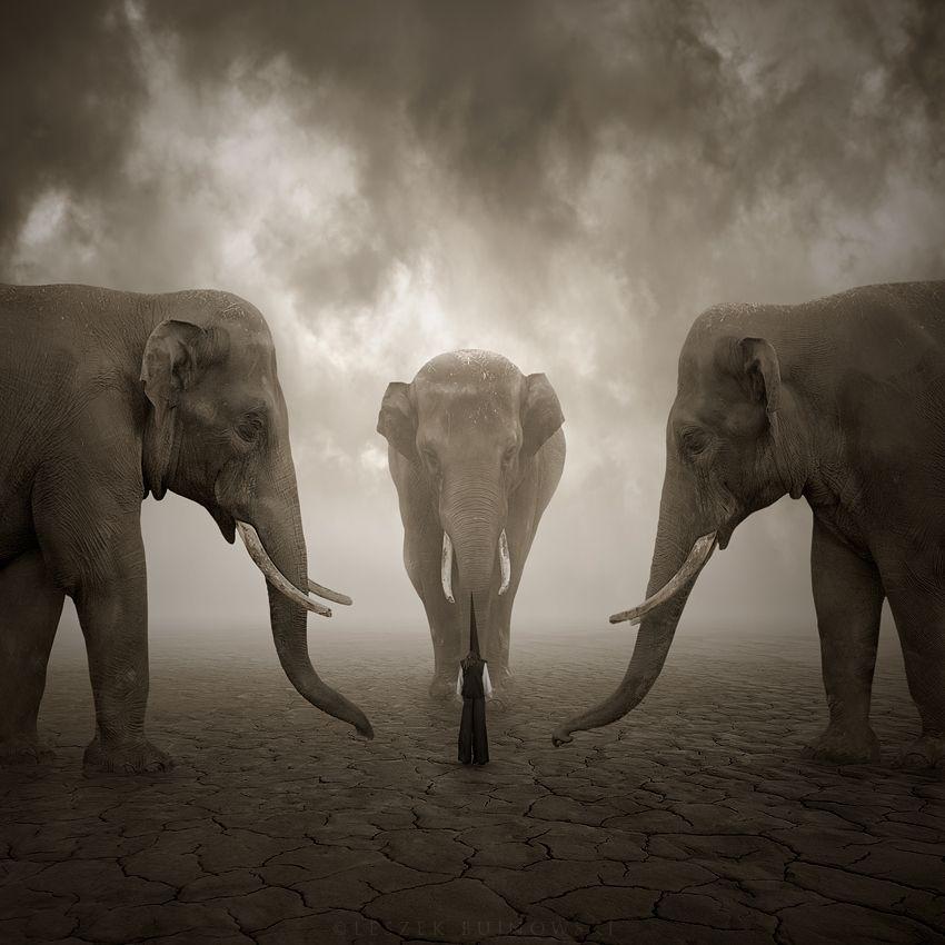 """""""Elephant whisperer"""" by Leszek Bujnowski"""