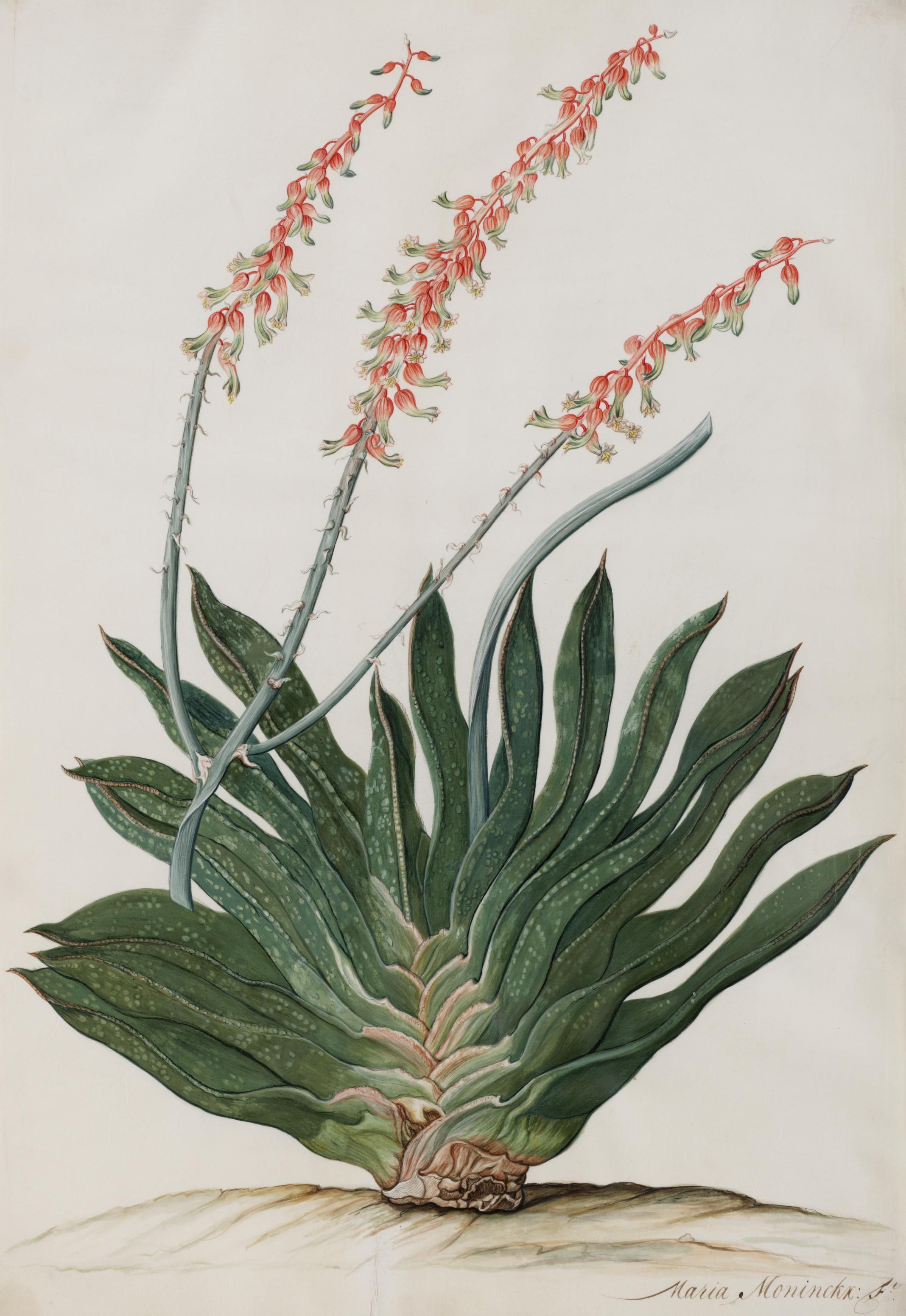 Epingle Par Corinne Ou L Italie Sur Bodegones Flores Botanica