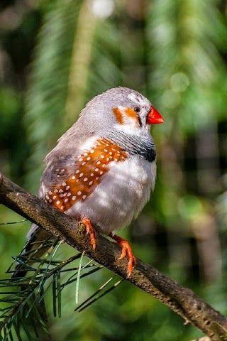 #bird 81