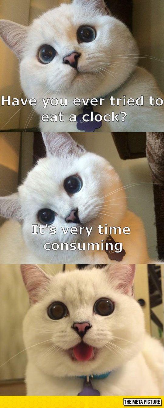 Cat Tells A Joke Funny Animal Memes Animal Jokes Funny Cat Memes