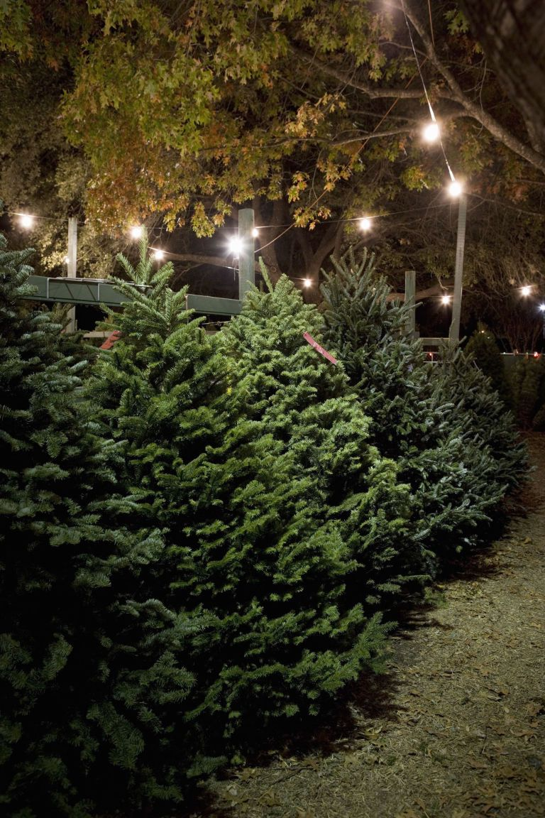 A Visitor S Guide To Spending The Holidays In Austin Texas Christmas Tree Farm Evergreen Wreath Holiday
