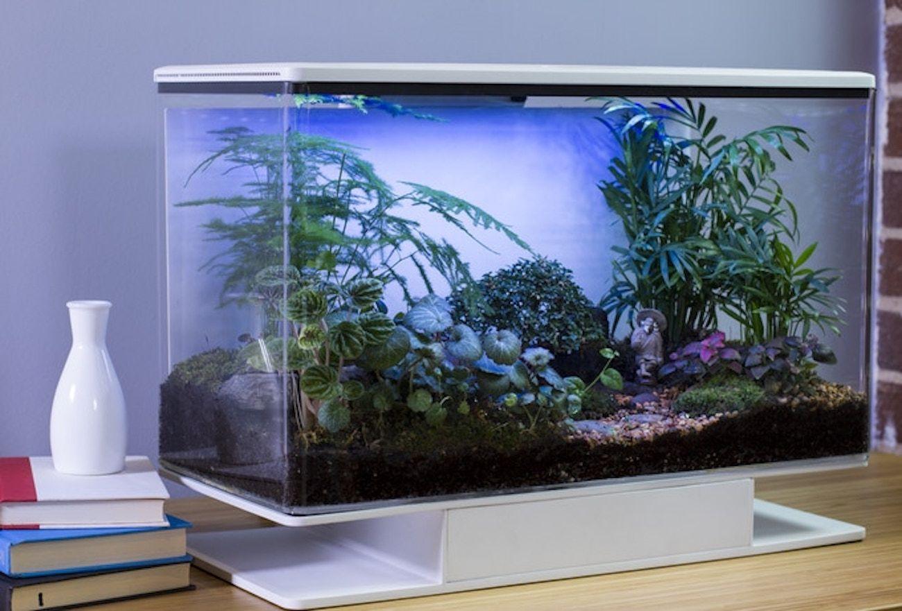 Unlike regular terrariums it autonomously maintains the ideal