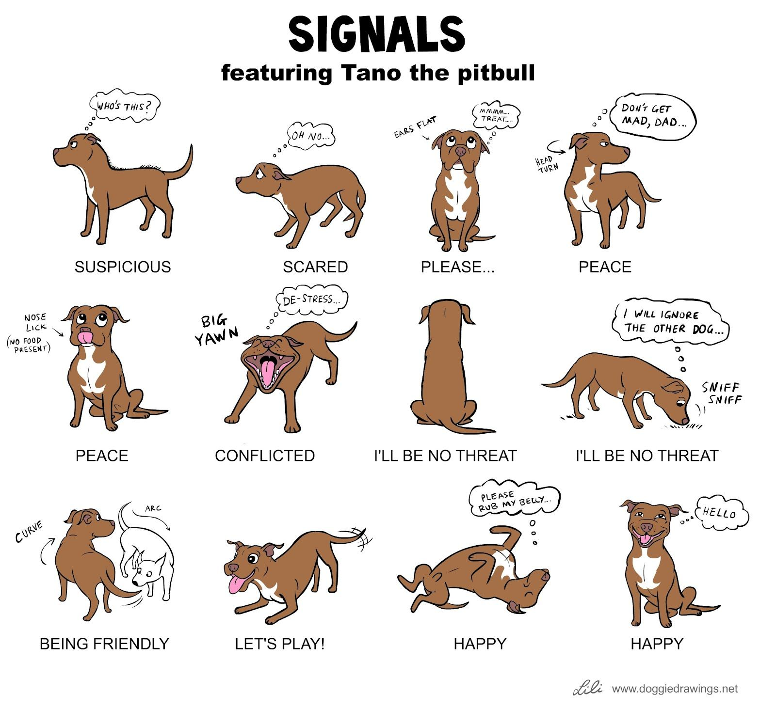 Doggie Signals featuring Tano the pitbull For the dog