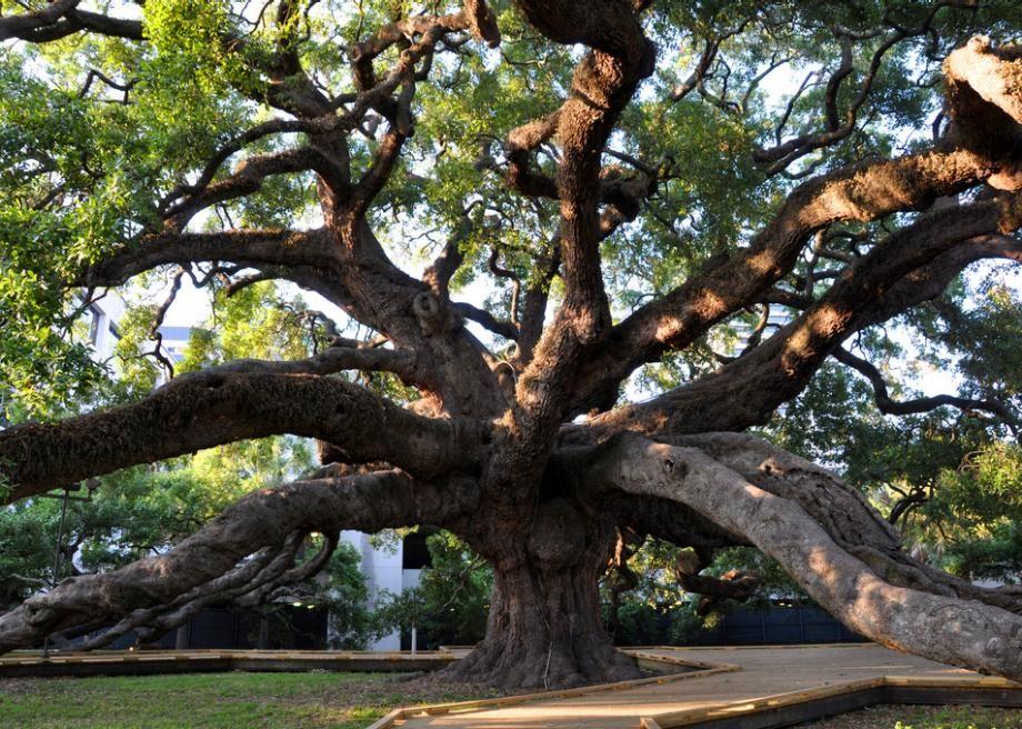 Slate on Florida trees, Jacksonville florida, Florida