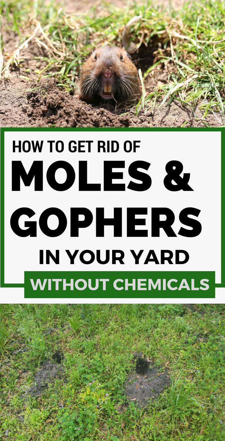 how to get rid of moles and gophers in your yard without chemicals