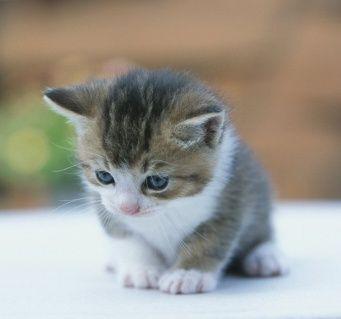 kawaii cats-cats-cats