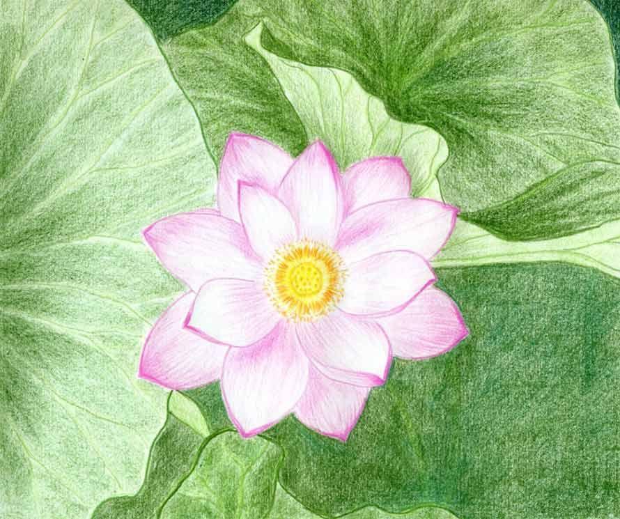 Lotus Flower Drawings Made Easy Flower drawing, Lotus