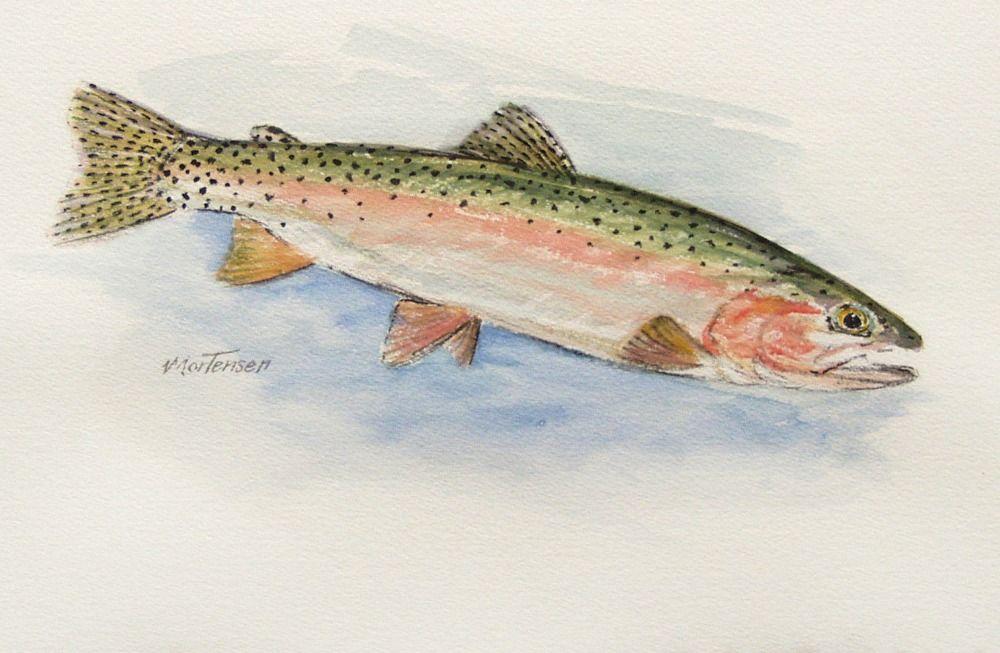 watercolor trout - Google Search | fish | Pinterest | Trout ...