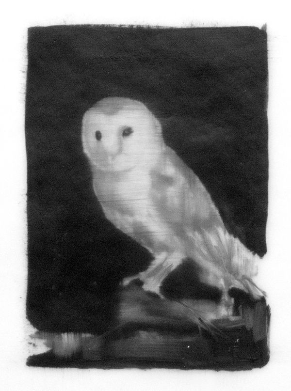 """We get a rare glance into the world of nighttime bird watching with Karyn Lions work, """"Owl."""" The lone animal seems to look right through us as the observers, while the mottled black background captures the moment in stark, eye-catching contrast."""