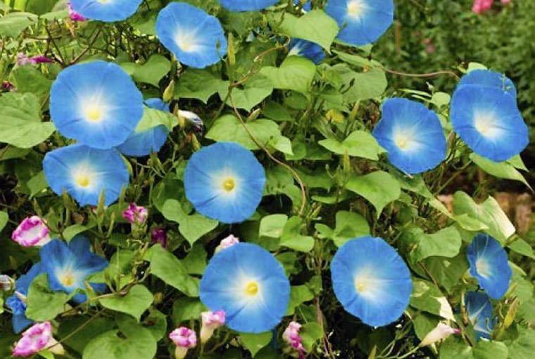 Najlepsze Kwiaty Na Balkon Jakie Rosliny Sprawdza Sie Na Balkonie E Ogrody Plants Garden