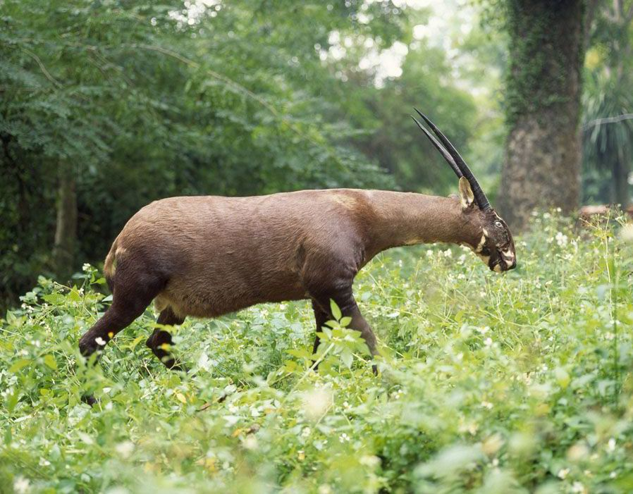 World's most endangered species Rare animals, Animals