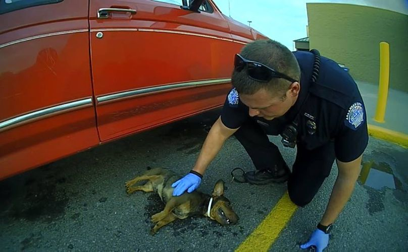 Police rescue dog hanging from a car in a store parking