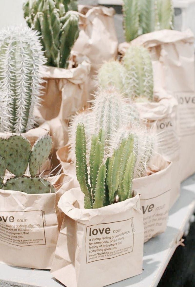 Pot different cacti varieties in paper bags to add some edginess to your wedding favor style.