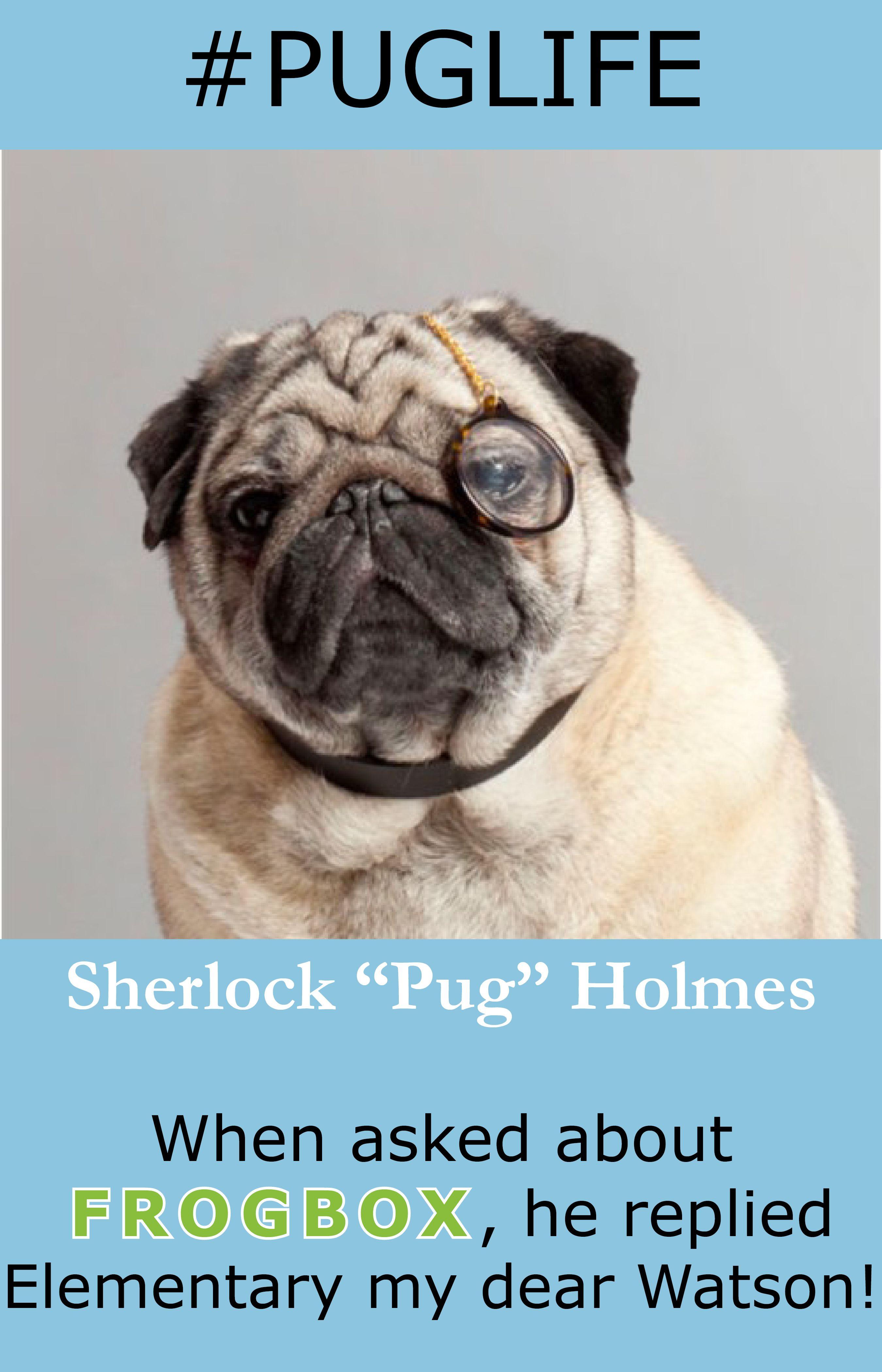 Living The Pug Life Loving The Frogbox Puglife Sherlockholmes