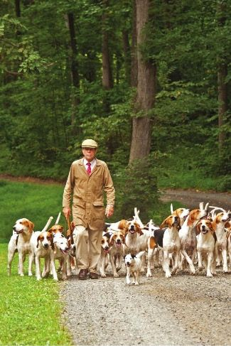The Hound Master Hound Sporting Dogs Hunting Dogs